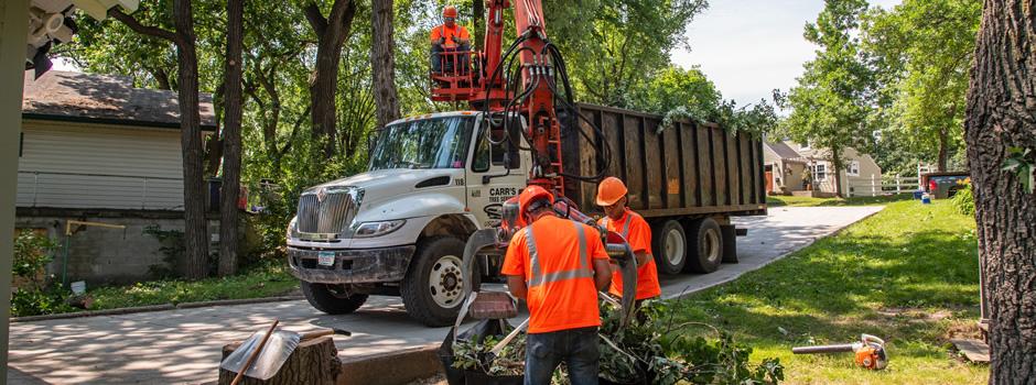 Tree Services San Antonio
